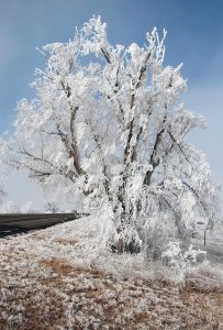 "Jim McJunkin: Photography ""Hoarfrost Tree"""